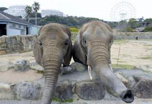 Adventure World elephants