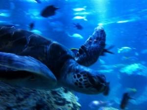 すみだ水族館には海の生き物がいっぱい!お得に行けるといいですね。