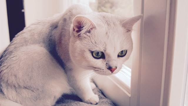 Cat (2)