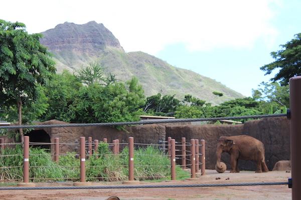 Honolulu zoo16