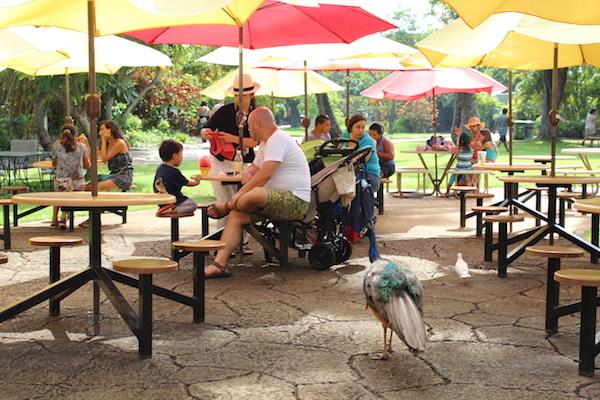 Honolulu zoo19