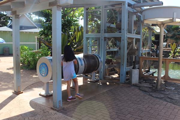 Honolulu zoo24