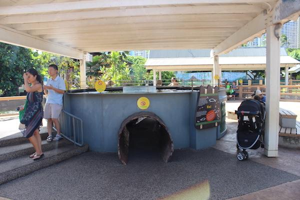 Honolulu zoo26