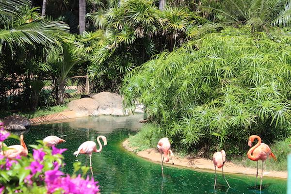 Honolulu zoo4