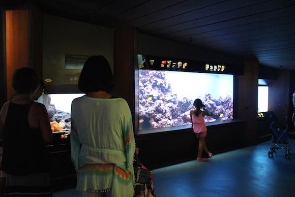 waikiki aquarium10