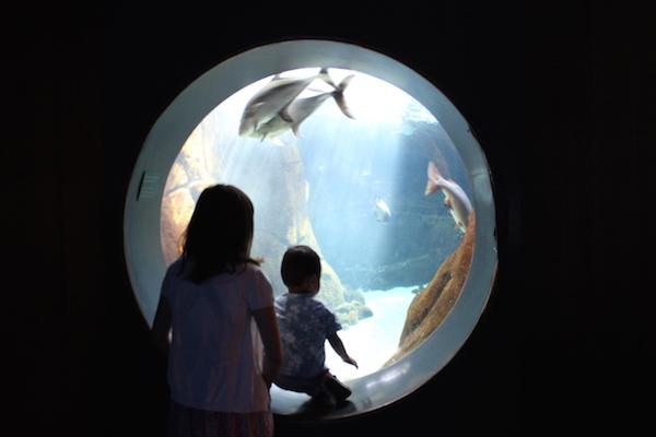 waikiki aquarium11