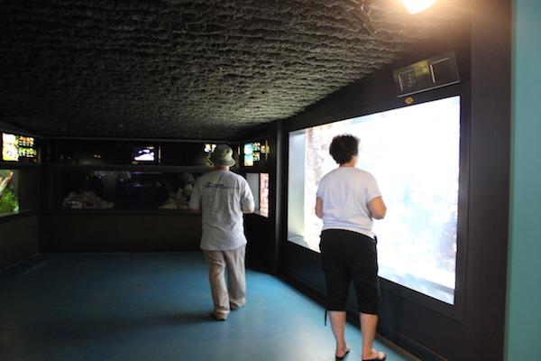 waikiki aquarium13