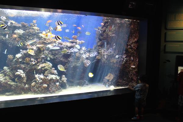 waikiki aquarium15