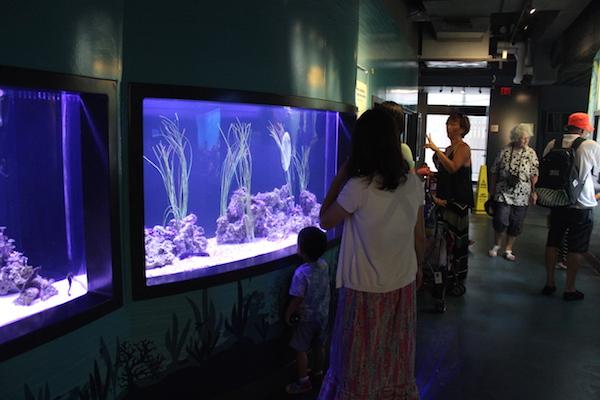 waikiki aquarium7