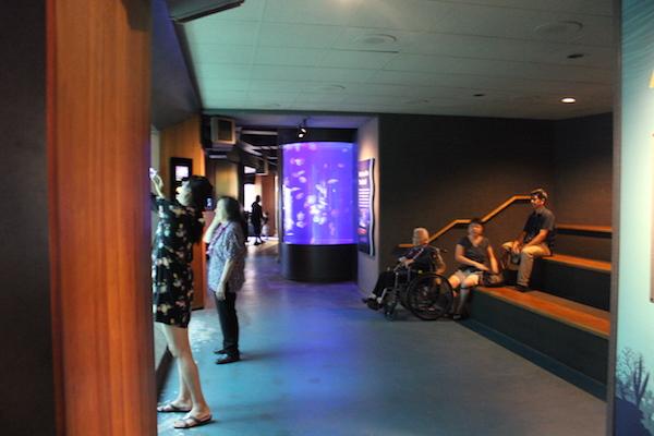 waikiki aquarium9