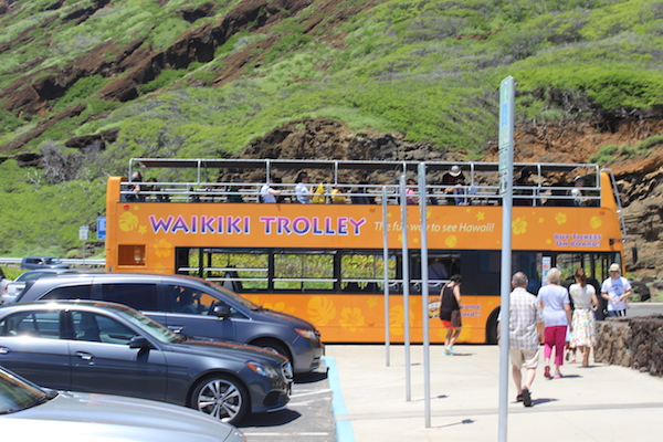 waikiki trolley bus23