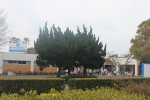 uminaka