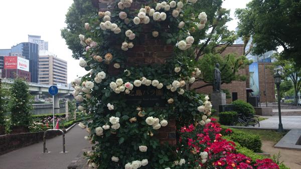2016-05-25 07.00.34nakanoshima rose park