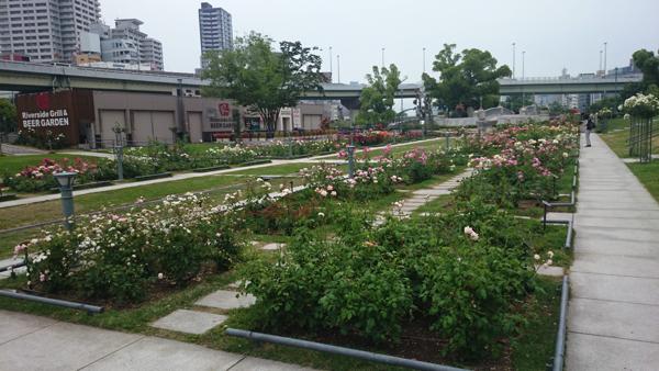 2016-05-25 07.03.22nakanoshima rose park