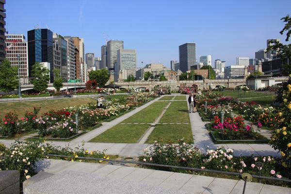 IMG_7868nakanoshima park rose