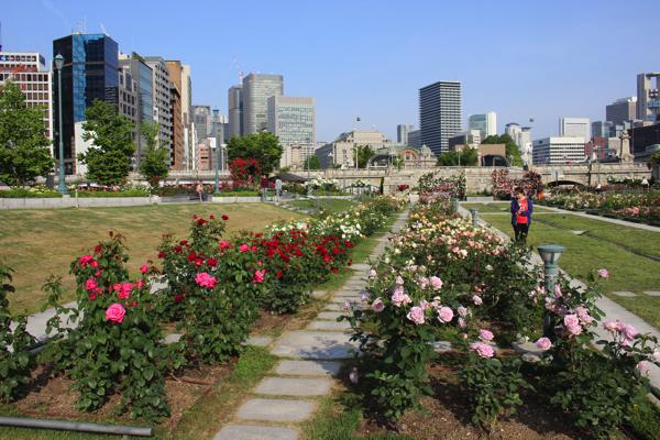 IMG_7880nakanoshima park rose
