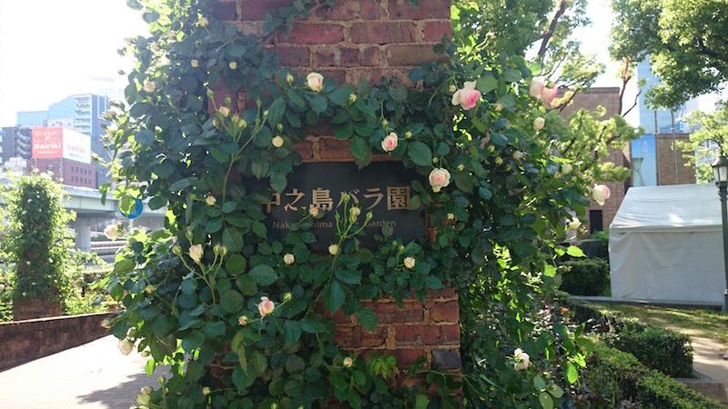 nakanoshima park rose10