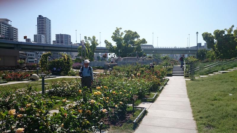 nakanoshima park rose5