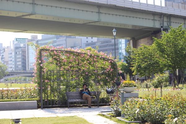 nakanoshima rose park4