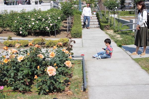 nakanoshima rose park5