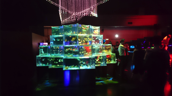 art_aquarium_osaka_2016009