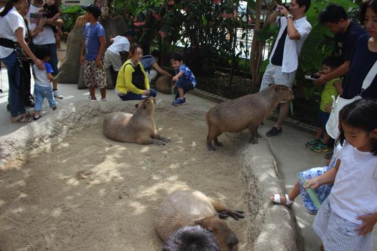 kobe_animal_kingdom128