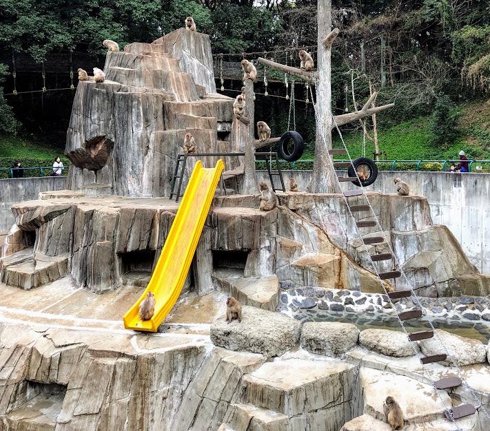 福岡市動物園のサル山
