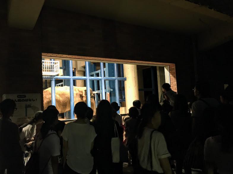 夜の動植物園