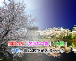 fukuoka Cherry Blossoms Eye-catching image