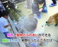 Kansai animal Eye-catching image