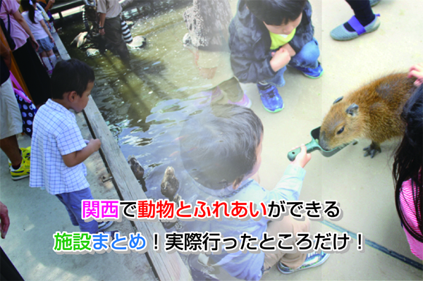 Kansai animal Eye-catching image
