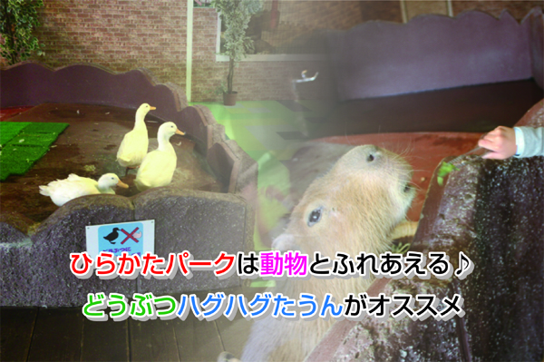 hirakatapark animal Eye-catching image