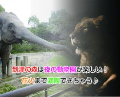 itozu-zoo night Eye-catching image