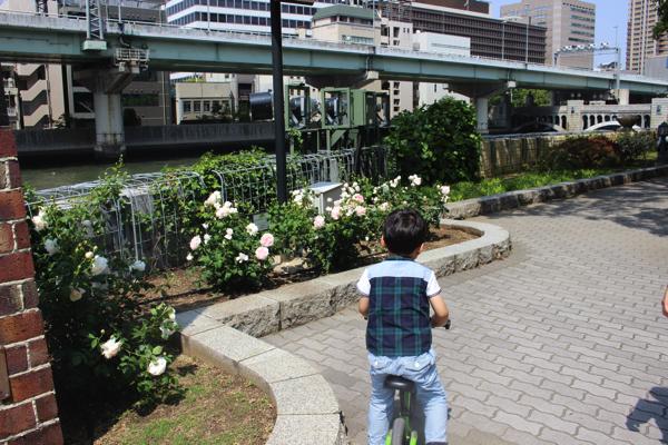 nakanoshima_rose_park037