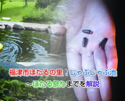 Village of Fukutsu firefly Eye-catching image