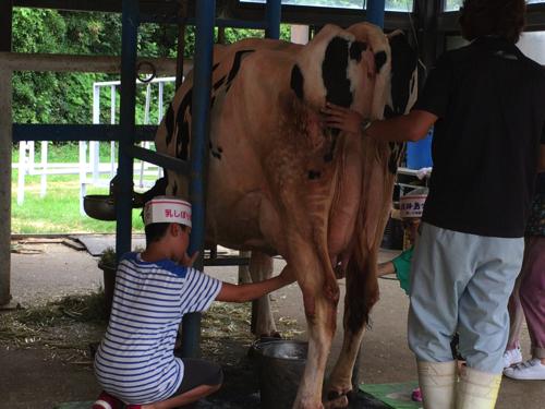 awaji_island_stock farm050