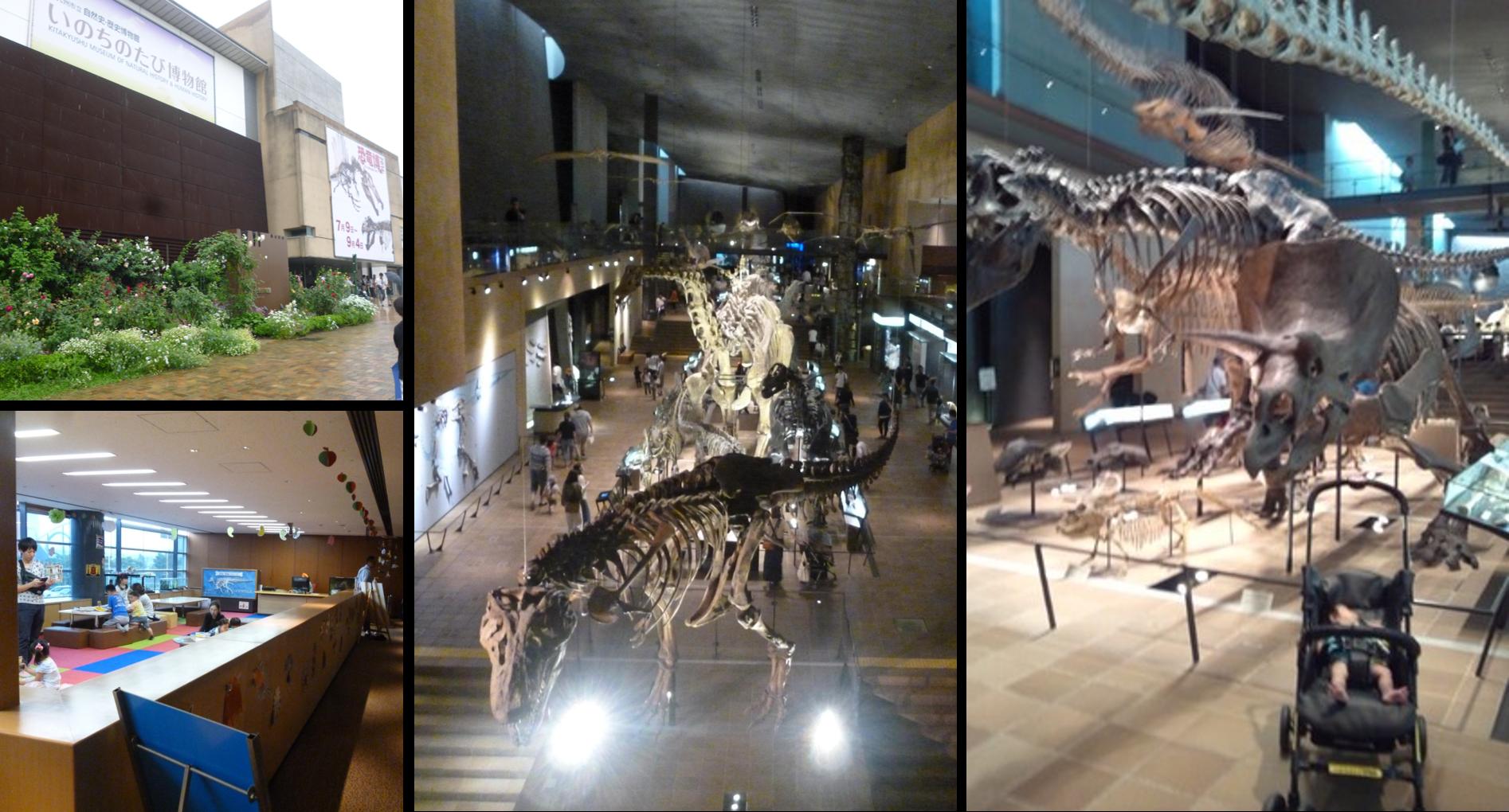 いのちのたび博物館写真まとめ