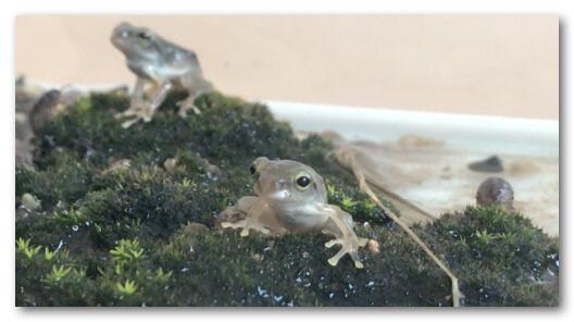 カエルの写真
