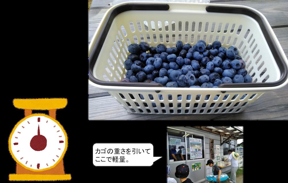福岡でブルーベリー
